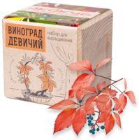 """Набор для выращивания растений """"Экокуб. Виноград Девичий"""""""