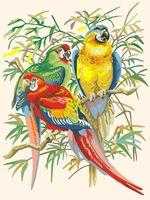 "Картина по номерам ""Тропические попугаи"" (400х300 мм)"