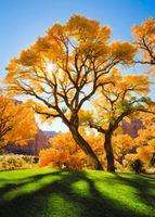 """Алмазная вышивка-мозаика """"Осеннее дерево"""" (400х500 мм)"""