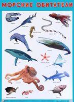 Плакат. Морские обитатели