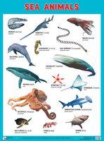 Sea Animals. Плакат