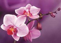 """Алмазная вышивка-мозаика """"Ветвь орхидеи"""" (270х380 мм)"""