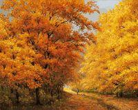 """Картина по номерам """"Осенний день"""" (400х500 мм)"""