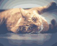 """Картина по номерам """"Рыжий кот"""" (500х400 мм)"""