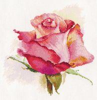 """Вышивка крестом """"Дыхание розы. Очарование"""" (240х240 мм)"""