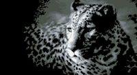 """Вышивка крестом """"Леопард"""" (400x225 мм)"""