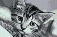 """Алмазная вышивка-мозаика """"Черно-белый кот"""" (200х300 мм)"""