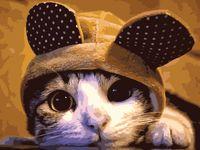 "Картина по номерам ""Задумчивый кот"" (400х500 мм)"