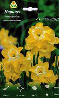 """Нарцисс ботанический многоцветковый """"Хиллстар"""""""