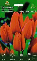 """Тюльпан простой поздний многоцветковый """"Ред Жоржетта"""""""