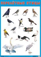 Развивающие плакаты. Перелетные птицы